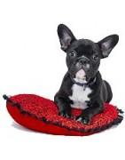 perros,alimentación,cuidados,ropa,complementos,paseo,adiestramiento