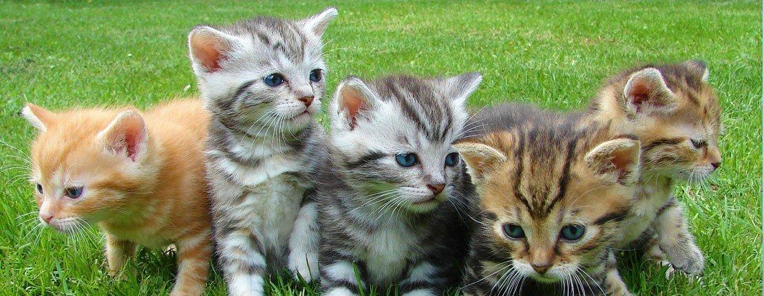Todo Para Gatos
